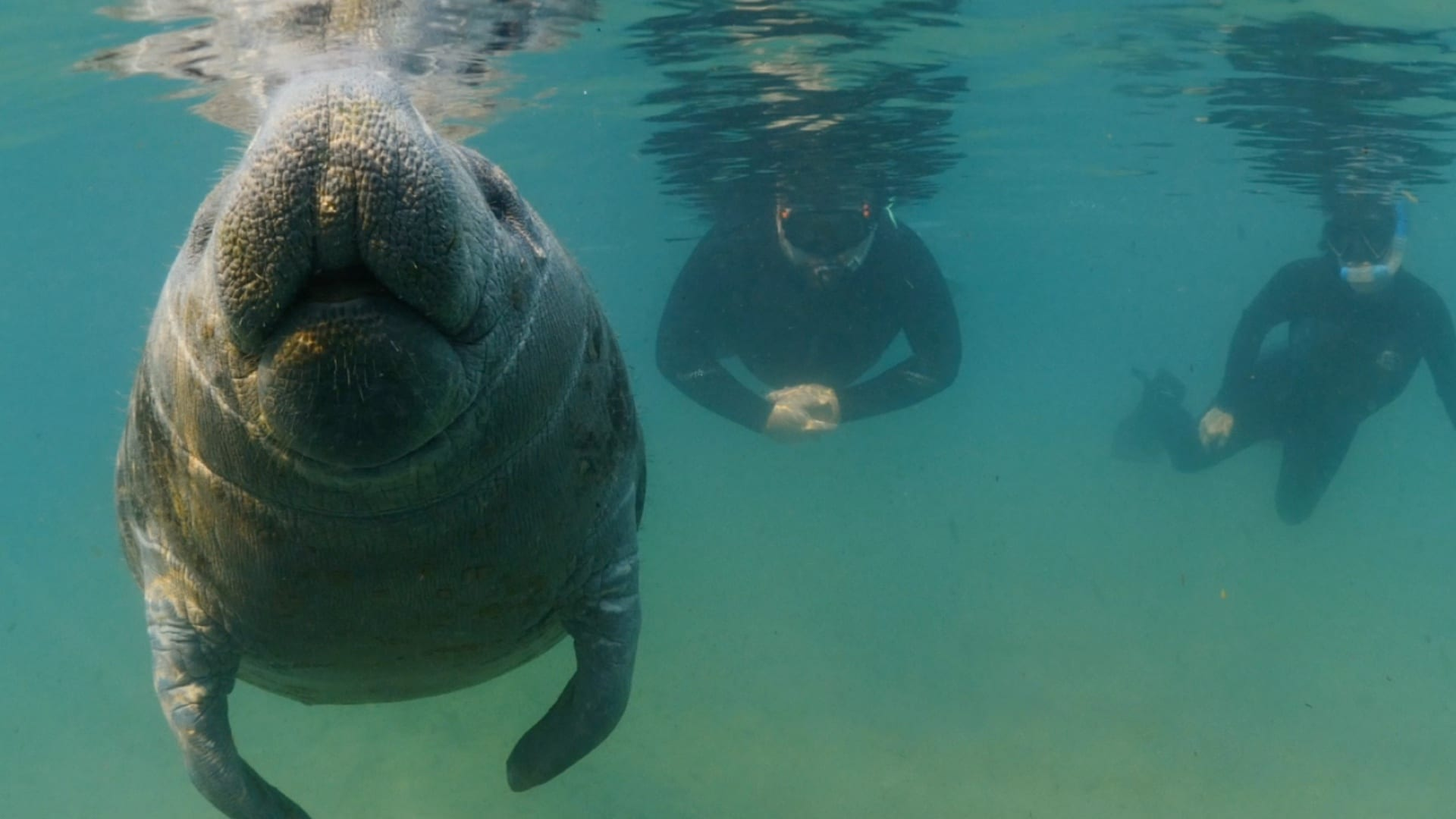 Swimming with Manatees Bird's Underwater